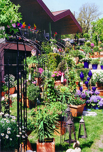 balkon und terrassenpflanzen balkonpflanzen terrassenpflanzen g rtnerei denecke bautzen balkon. Black Bedroom Furniture Sets. Home Design Ideas