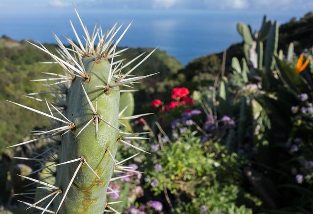 Super Last Minute La Palma